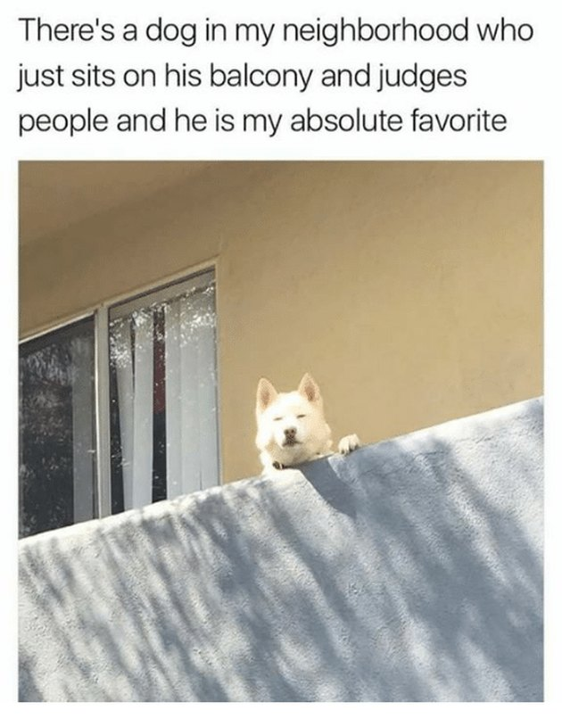 Dog looking down from balcony.