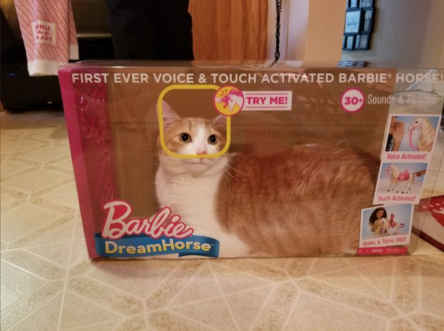 Twitter trots out the jokes when cat is found sitting in Barbie Dream Horse box