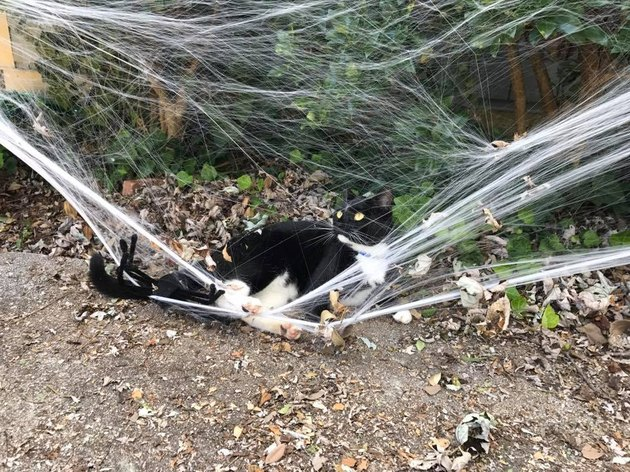 Cat playing in Halloween decorations