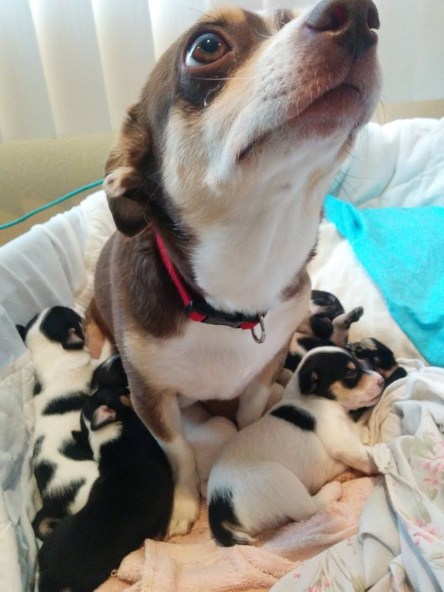 23 Photos Of Tired Animal Moms To Share With Your Mother