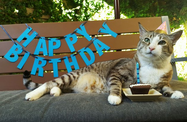 Pecan the cat celebrates his 12th birthday