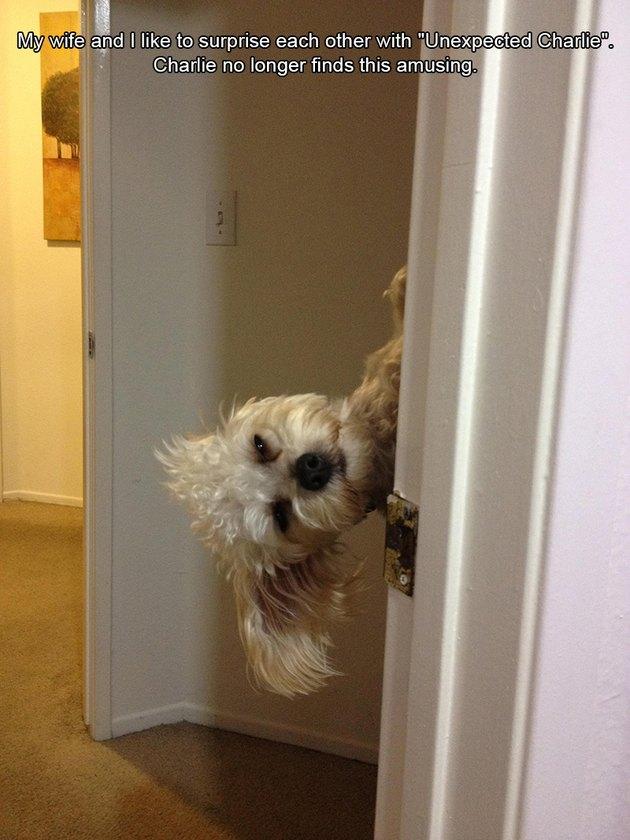 Dog looking sideways through doorway
