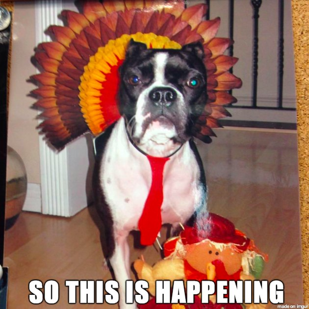 Dog with a turkey decoration for Thanksgiving
