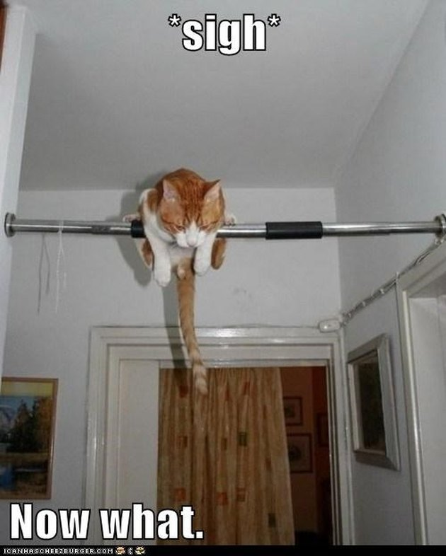 Cat balanced on pull-up bar.