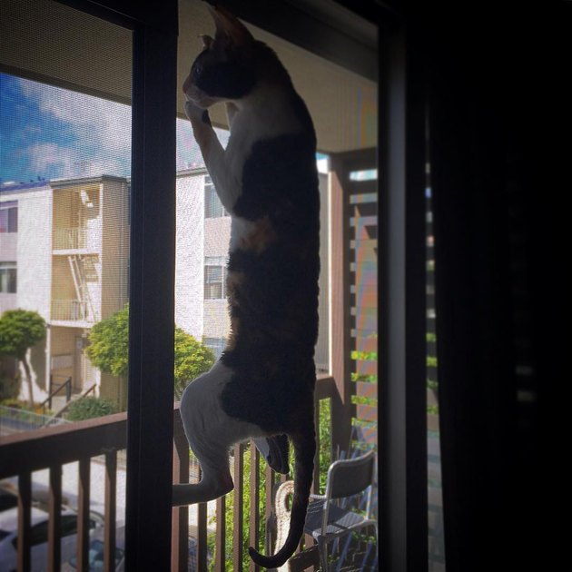 17 cats that are basically just furry house monkeys