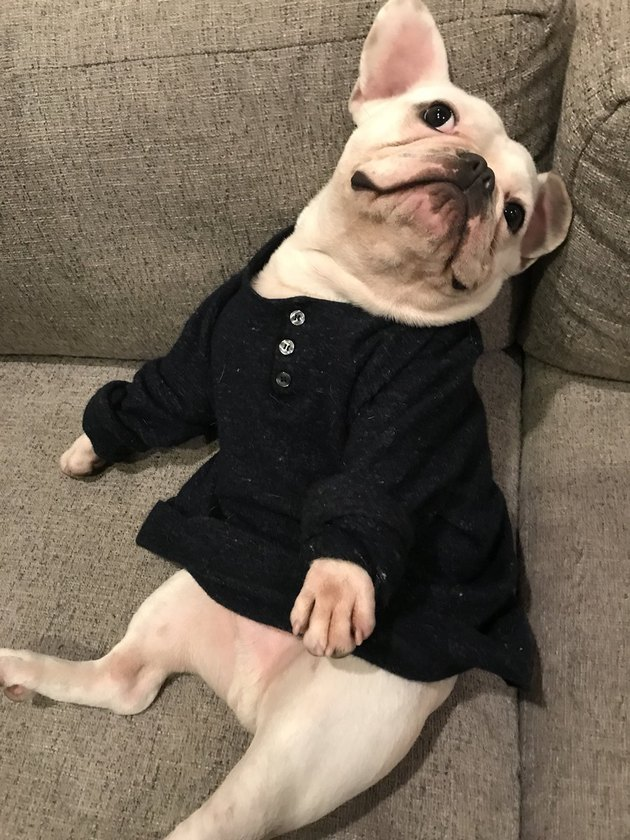 Dog gifted with man's treasured wool shirt for the most relatable reason