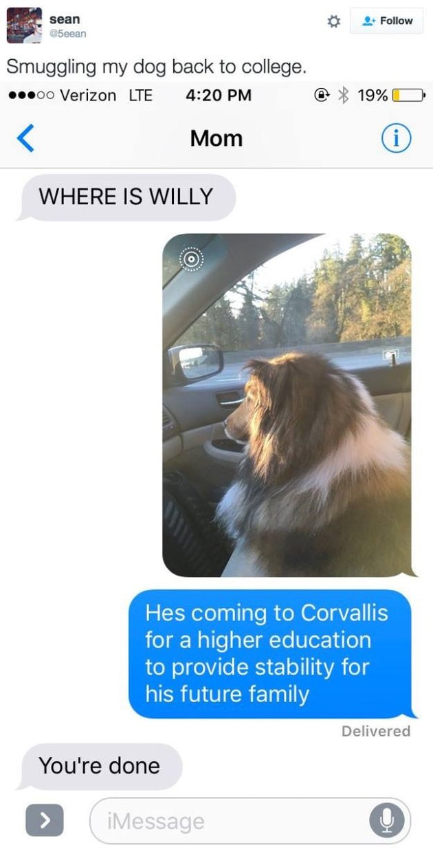 Text message exchange about dog.