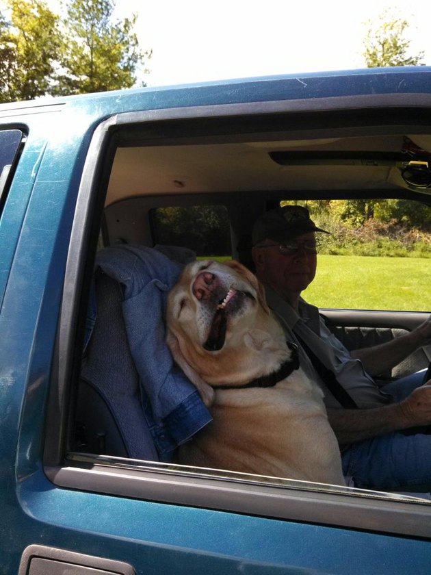 Dog looking happy in car passenger's seat.