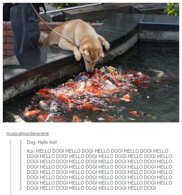 Dog looking at many fish.