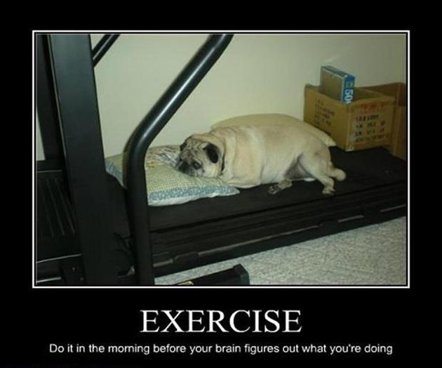 Fat dog resting on treadmill.
