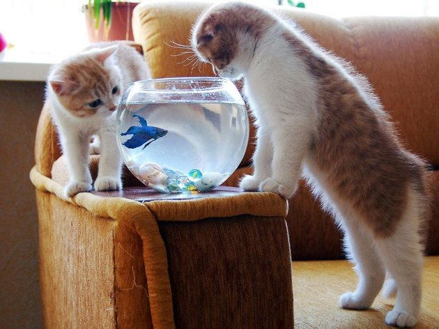 Kittens and Fish