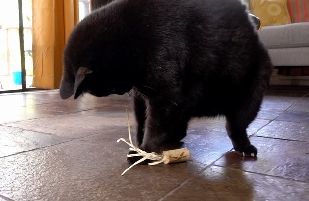 Cat playing with DIY cat toys out of a wine cork and raffia.