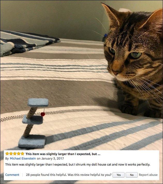 Funny Amazon reviews (tiny cat tree)