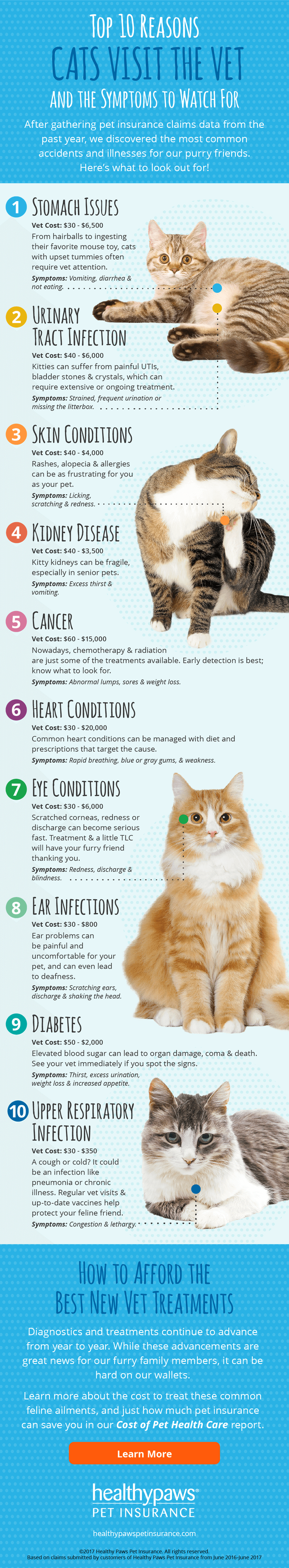 Top 10 Reasons Cats Visit The Vet