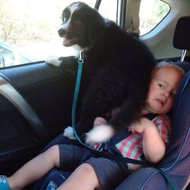 dog on small child