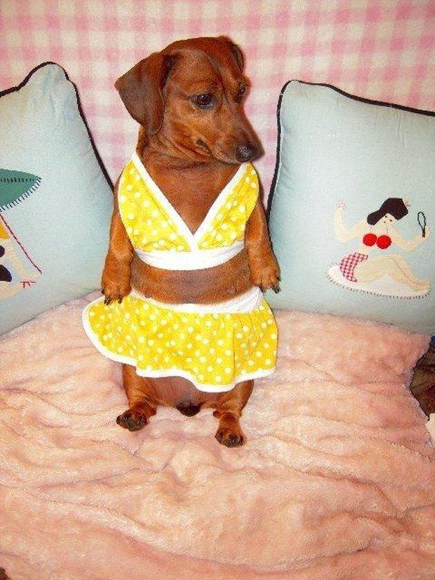 21 Dogs Who Flaunt Their Bikini Body Better Than You
