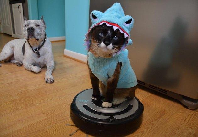 RIP Max the Roomba shark cat