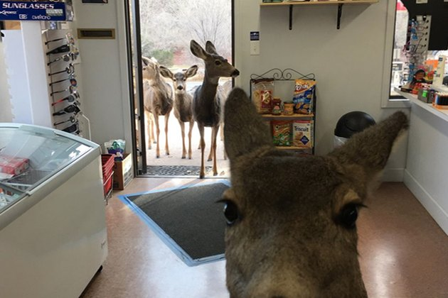 A Deer Walks Into A Grocery Store & What Happens Next Is Adorable