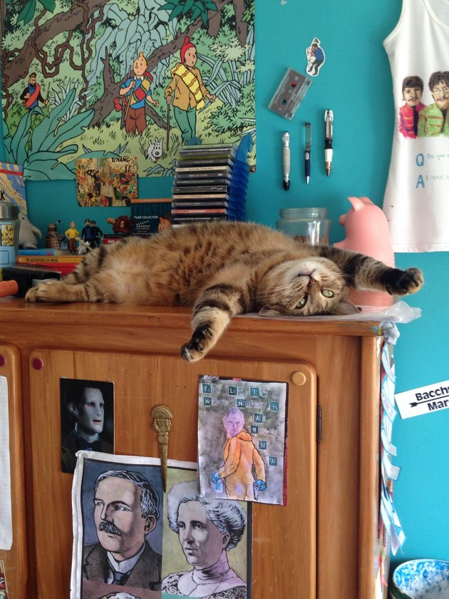 Cat laying on back on table