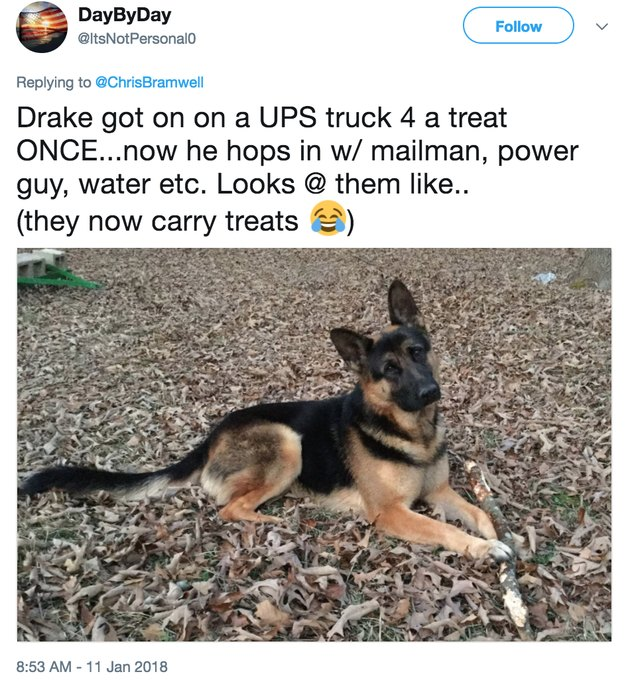 german shepherd ups friend