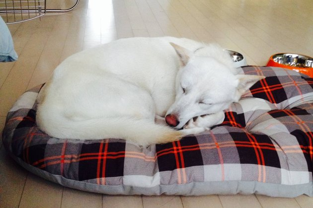 Dog curled up on bed.