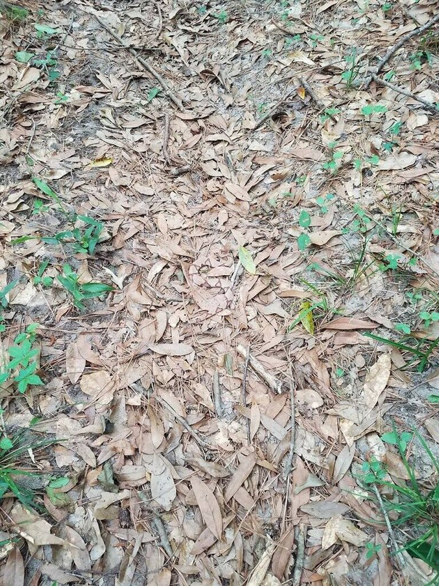 Only true ssssssss-nake fans will be able to find the copperhead hidden in this picture