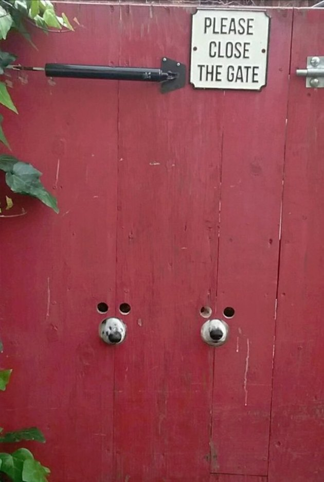 Gate with holes cut for dog eyes and dog noses