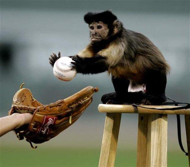 Small monkey with a baseball.