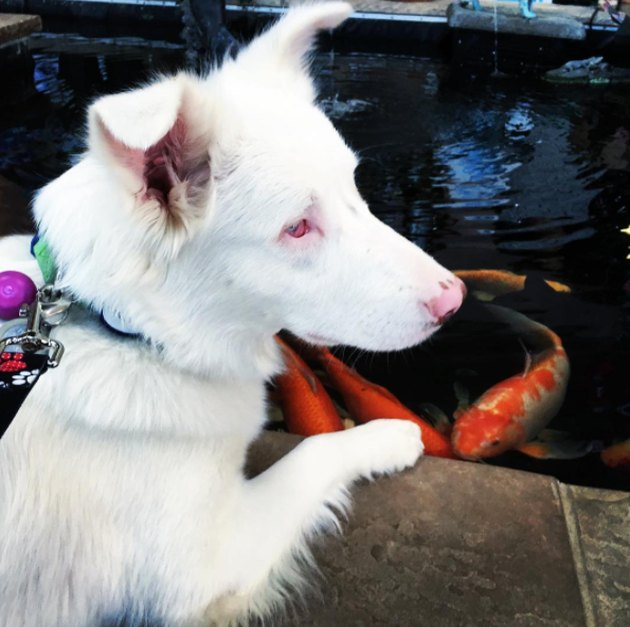 Adventurous blind, deaf pup just had the best year