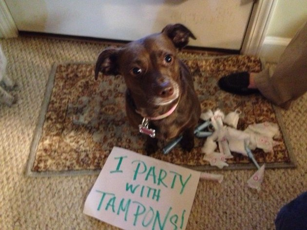 What To Do When Your Dog Eats A Tampon