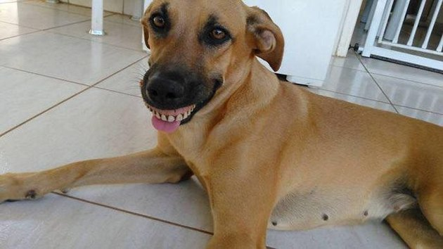 Brazilian dog digs up dentures, hilarity ensues