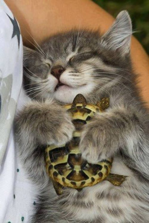 17 Sleepiest Kitties To Ever Take A Nap