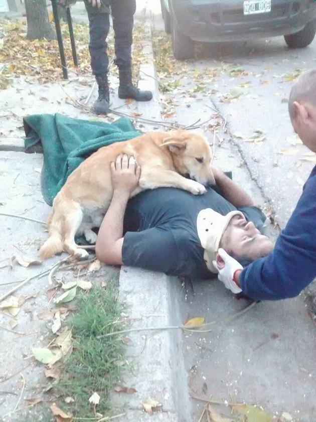 loyal dog 2