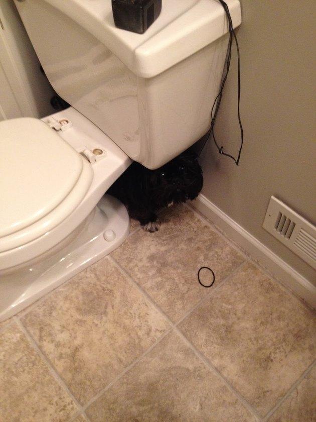 Black dog hiding behind toilet.