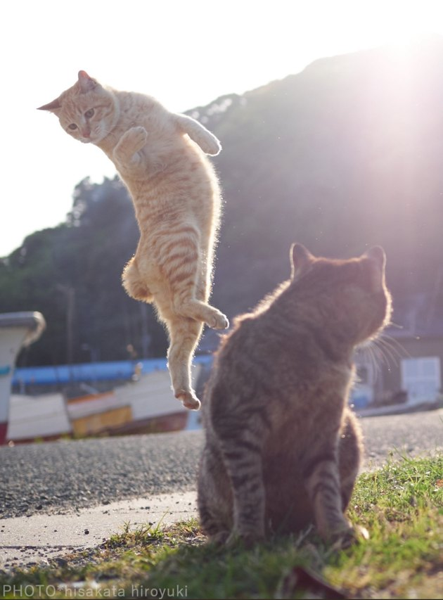 Photog Coaxes Cats Into Silly Kung Fu Poses With One Simple Trick