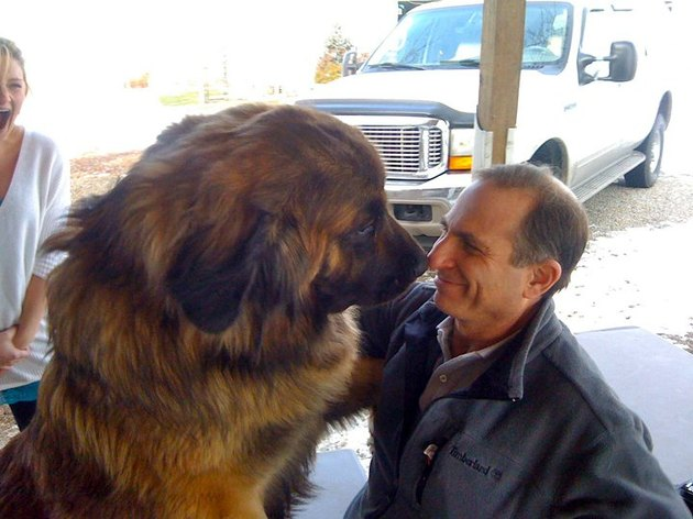 Big dog nose-to-nose with man.