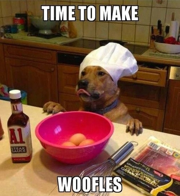 Dog wearing chef's hat
