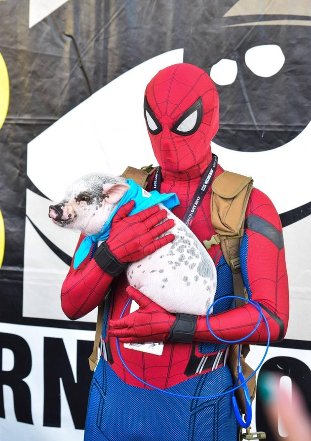 Man in Spider-Man costume holding a pig.