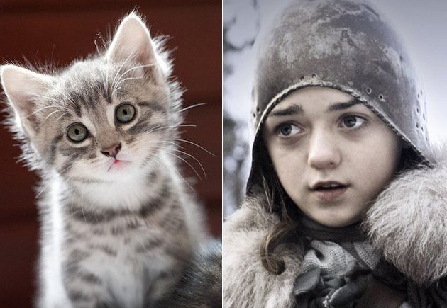 Top 10 Pet Names For Game of Thrones Fans