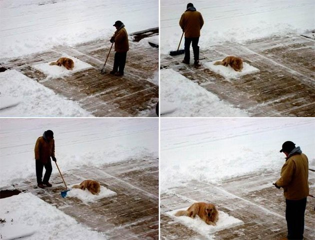 Photo set of man shoveling snow around dog that won't move.