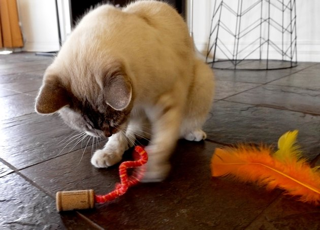 Cat playing with DIY cat toy out of a wine cork and pipe cleaner.