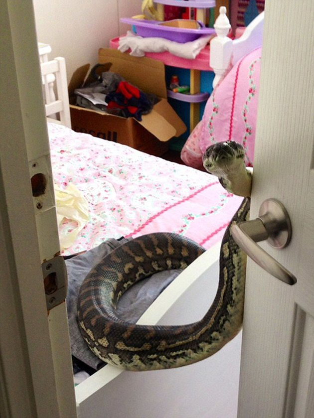 Snake opens bedroom door.