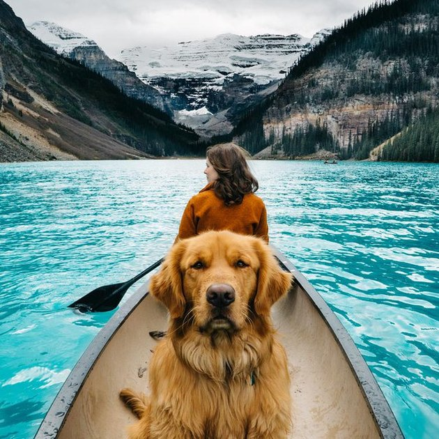 Dog in canoe with beautiful landscape.