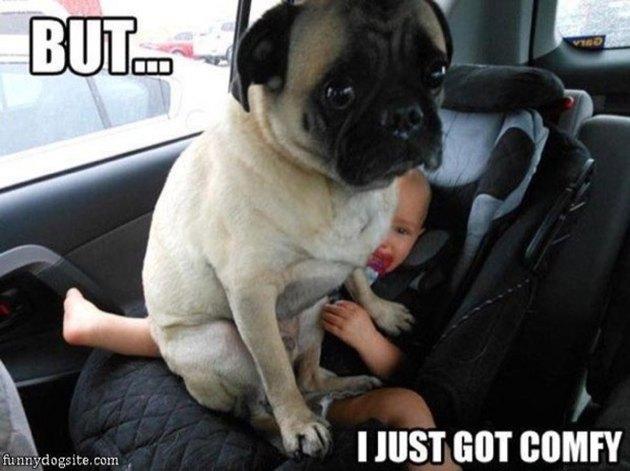 dog on baby