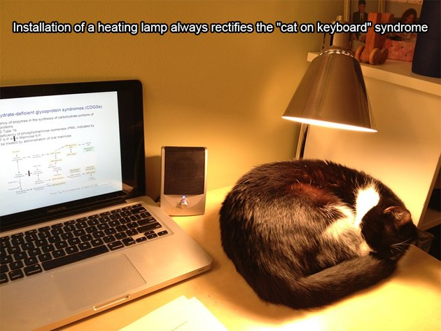 "Cat sleeping under a lamp next to a laptop. Caption: Installation of a heating lamp always rectifies the ""cat on keyboard"" syndrome"