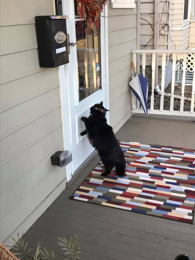 Cat looks through front door.