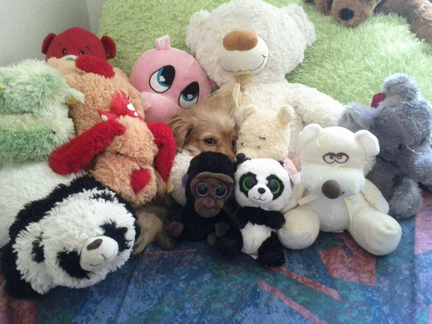 Small dog hidden in pile of stuffed animals.