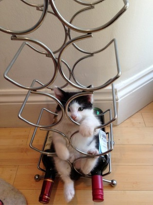 Cats Fitting Themselves into Weird Spaces