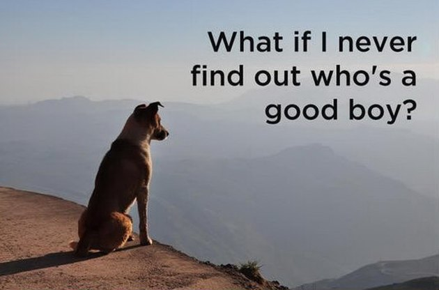 existential dog