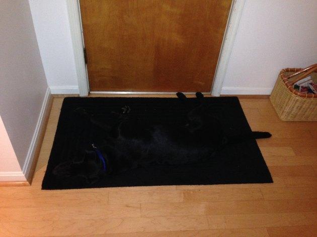 Black dog on black doormat.